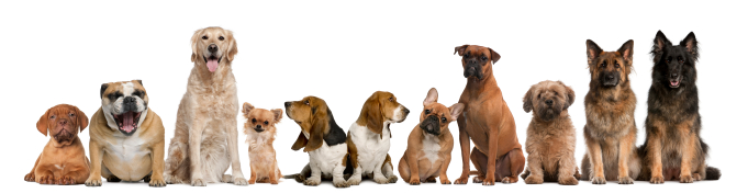 Group of dogs sitting against white background